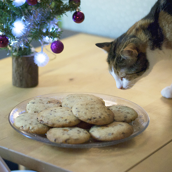 chat cookies